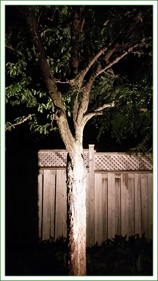 Outdoor Lighting - Tree Light