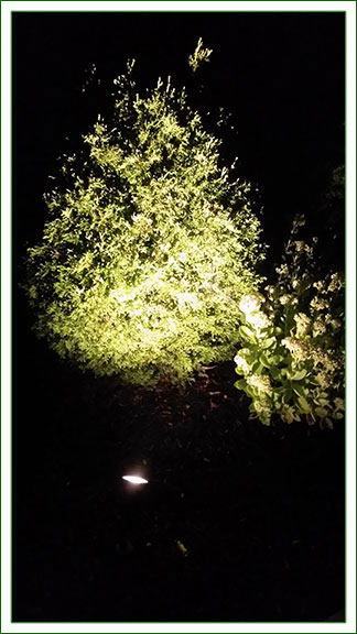Outdoor Lighting - Up Lighting